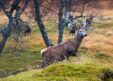 Deer Stalking 7 Stock Photos
