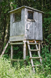 Deer stand in a forest, vertical view Royalty Free Stock Images