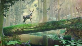 Deer standing on fallen tree bridge in beautiful foggy forest landscape. Beautiful deer crossing a river crossing in the woods royalty free illustration