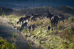 Deer standing on the frozen meadow near the river stock images