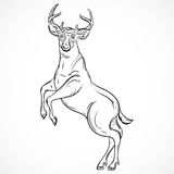 Deer standing on hind legs. Vintage vector hand drawn illustration in sketch style. Stock Images