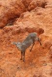 Deer standing Stock Images