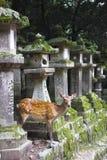 Deer at Todaiji temple in Nara, Japan Royalty Free Stock Photos
