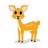 Deer. Standing on a white background Stock Images