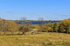 Deer stands in a rural autumn setting Royalty Free Stock Images