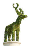 Deer statue bye wired tree isolated on white Royalty Free Stock Photo