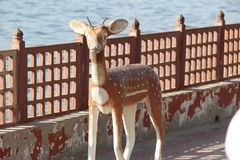 A DEER STATUE NEAR A LAKE royalty free stock photos