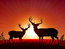 Deer on Sunset Background Stock Photography