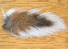 Deer tail Stock Image