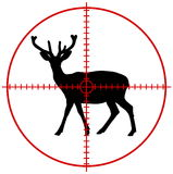 A deer in a target Stock Image