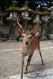 Deer temple Royalty Free Stock Photography