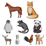 Deer, tiger, cow, cat, rooster, owl and other animal species.Animals set collection icons in cartoon style vector symbol. Stock illustration Royalty Free Stock Image