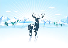 Deer to winter Stock Photography