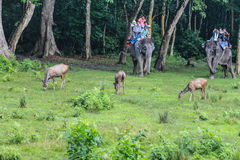 The deer and the tourists on the elephant in the forest park in chitwan,Nepal Royalty Free Stock Photography
