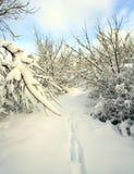 Deer Trail snow Royalty Free Stock Photos