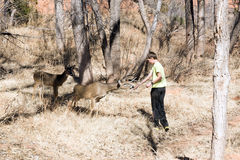 Deer trustingly reaches for the hand of a child. Palo Duro Canyo Stock Photography