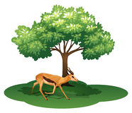A deer under the tree. Illustration of a deer under the tree on a white background stock illustration