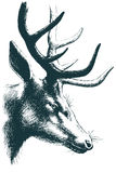 Deer vector sketch Royalty Free Stock Photography