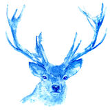 Deer. Wild animal image. Stock Photo