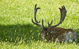 Deer & wildlife Stock Photo