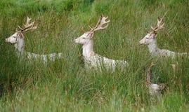 Deer, Wildlife, Ecosystem, Mammal Royalty Free Stock Photo