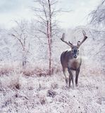 Deer in the winter forest. After snow storm royalty free stock photos