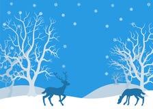 Deer in winter forest Stock Photo