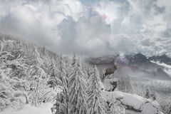 Deer Winter Mountain View. Snowy winter mountain scape with a deer, standing on a cliff in a sun beam Stock Image