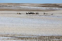 Deer in winter Stock Photo