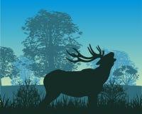 Deer in wood Royalty Free Stock Image