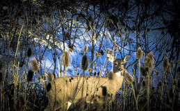 Deer hiding Stock Images