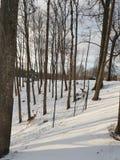 Deer yard. Deers and does in winter stock photos