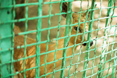 Deer in a zoo behind a fence Royalty Free Stock Photography
