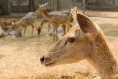 Group of deer Royalty Free Stock Images