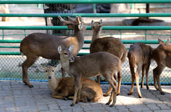 Deer in the zoo stock images