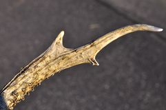 Deere horn stock photos