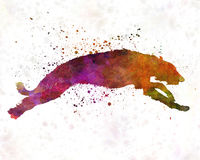Deerhound im Aquarell Lizenzfreie Stockbilder