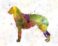 Deerhound in watercolor Royalty Free Stock Images