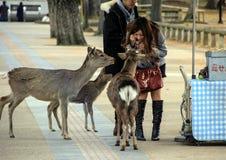 Deers και άνθρωποι στο Νάρα Στοκ Φωτογραφίες