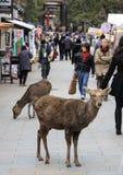 Deers και άνθρωποι στο Νάρα Στοκ φωτογραφίες με δικαίωμα ελεύθερης χρήσης