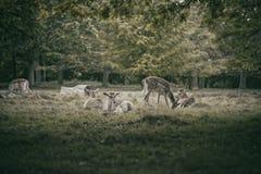 Deers κατάψυξης Στοκ Εικόνα