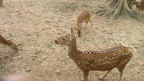 Deers σε Sarnath Στοκ φωτογραφία με δικαίωμα ελεύθερης χρήσης