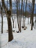 Deers στο χειμερινό τοπίο στοκ φωτογραφία με δικαίωμα ελεύθερης χρήσης