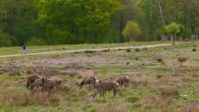 Deers το απόγευμα φιλμ μικρού μήκους