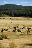 Deers Images libres de droits
