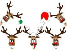 滑稽的deers 免版税库存照片