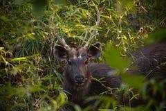 Deers Stock Foto
