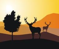 Deers Royalty-vrije Stock Foto's