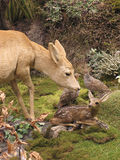 Deers. Mother and child on forest stock photo