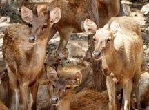 deers Imagen de archivo